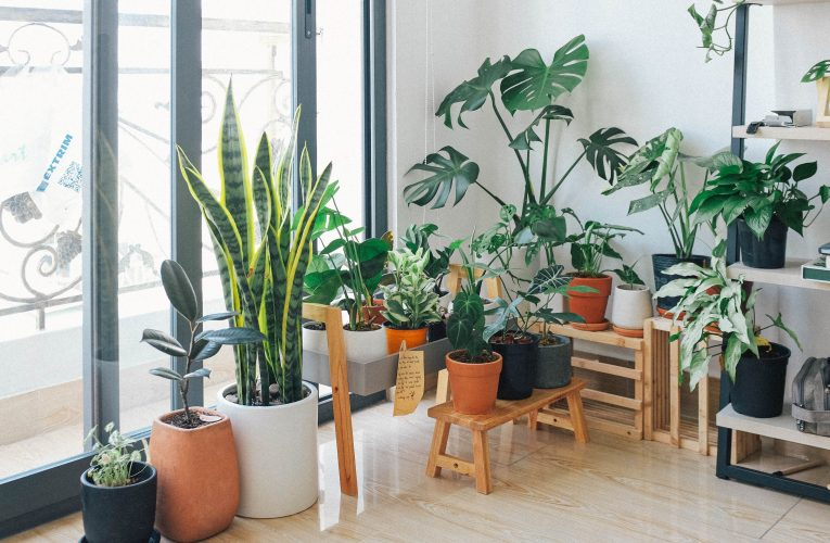 Plants with Benefits